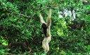 Национальный парк Као Лак Люкс