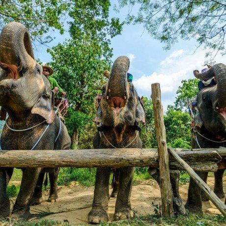 Катание на слонах на Пхукете, шоу слонов